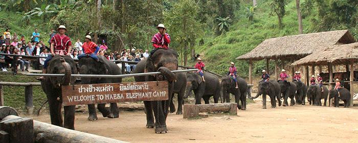 泰國清邁美莎大象營Mae Sa Elephant Center騎大象門票,清邁大象一日遊,清邁大象園,清邁馬沙大象