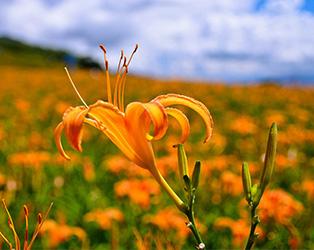 花蓮到六十石山交通
