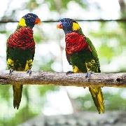 吉隆坡飛禽公園門票(含單程酒店接)