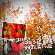 大棠賞紅葉+草莓園+大尾篤燒烤皇任燒任食BBQ一日遊